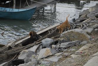chat et chien sur le quai de Mila 23